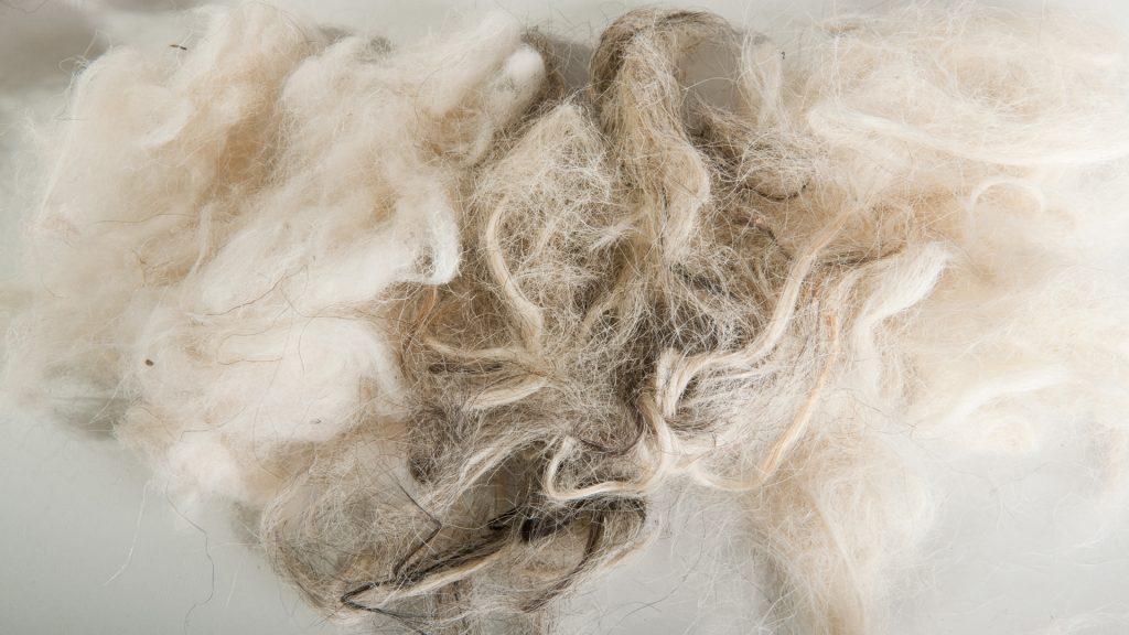 Haar-und-Wolle